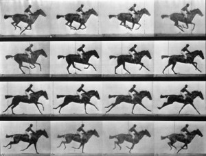 horse-in-motion