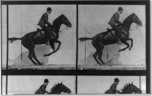 horse-in-motion-jumping