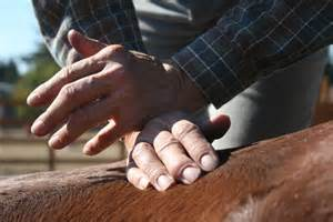 Myofascial Release Beverly Jacobs Equine Massage Part 2